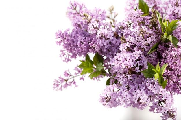 紫のライラックシリンガの花