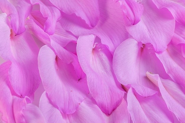 Фиолетовая композиция лепестков лилий, заделывают.