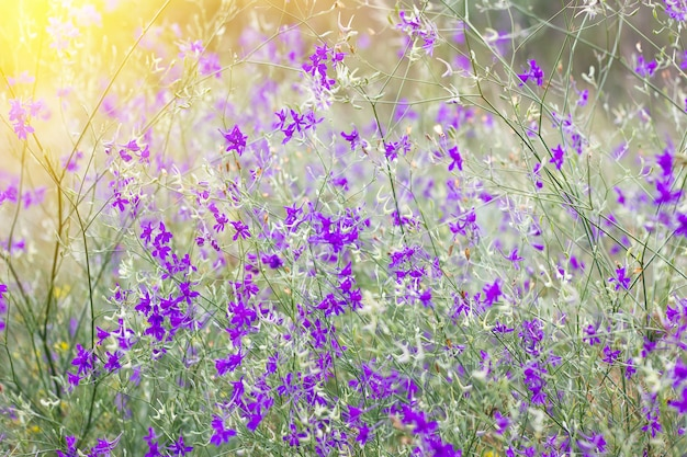 Purple little wild flowers, abstract natural background