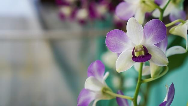 보라색 달 난초 꽃