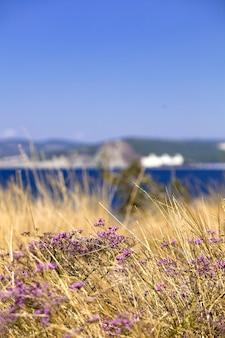 青い海と空を背景に紫色の山の花。