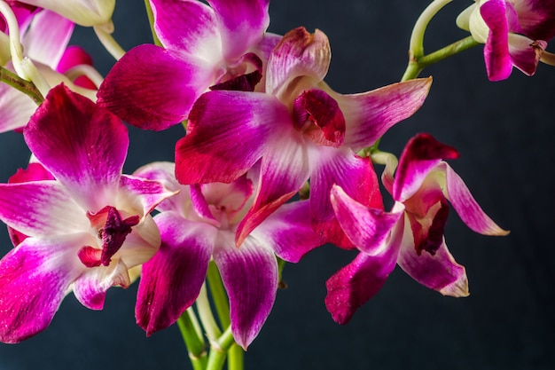 Purple orchid flower on  black background, studio shot.