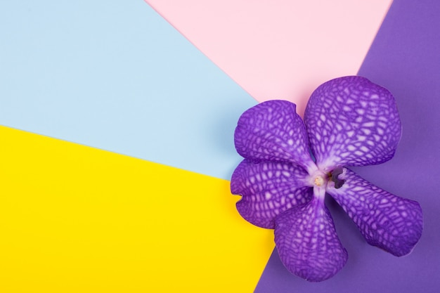Purple orchid flower on a bright multicolored background