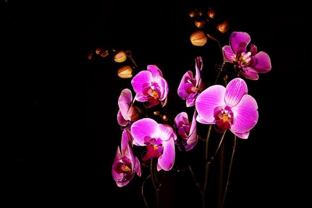 Фиолетовый цветок орхидеи изолирован