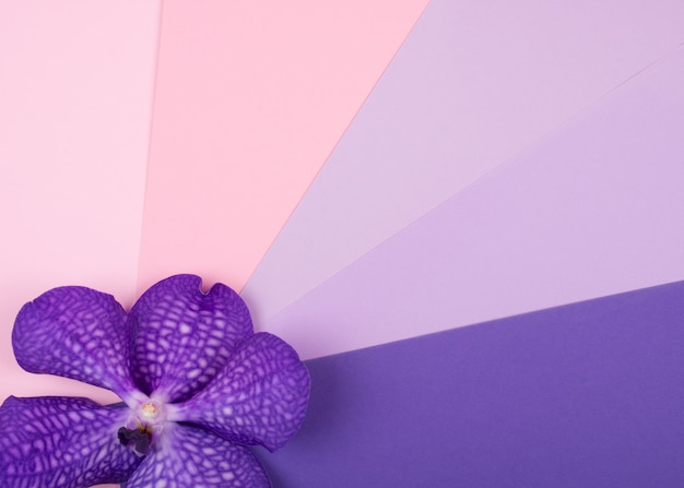 Purple orchid flower on a multicolored background