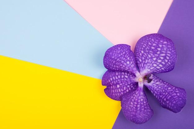 明るい多色の背景に紫の蘭の花