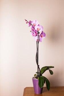 Фиолетовый цветок орхидеи очень крупным планом как фон