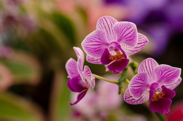 Purple orchid flowers pattern background blur