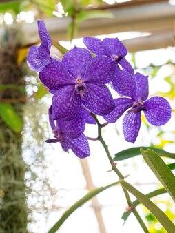 고립 된 보라색 난초입니다. 부드럽고 사랑스러운 꽃은 예술적 구성, 호접란 꽃에서 볼 수 있습니다.