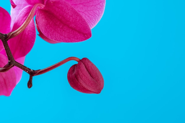 紫色の蘭の花が青にクローズアップ