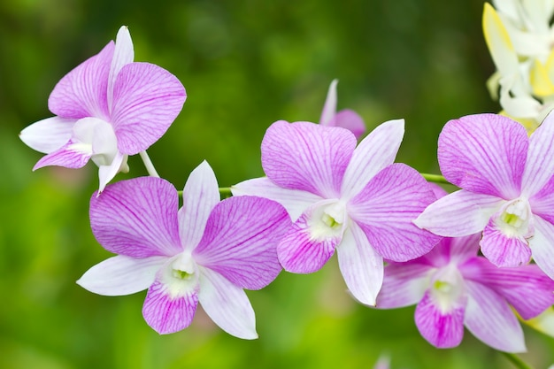 Purple orchids blooming in the garden