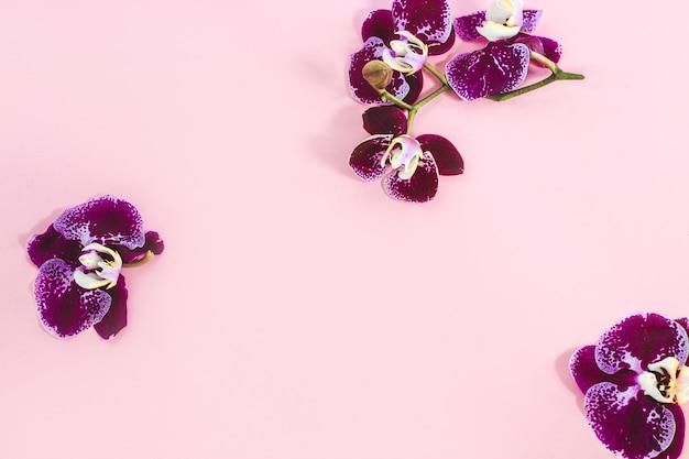 분홍색 배경에 보라색 난초입니다. 텍스트를 위한 공간