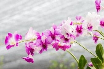 Purple orchids on vintage style.