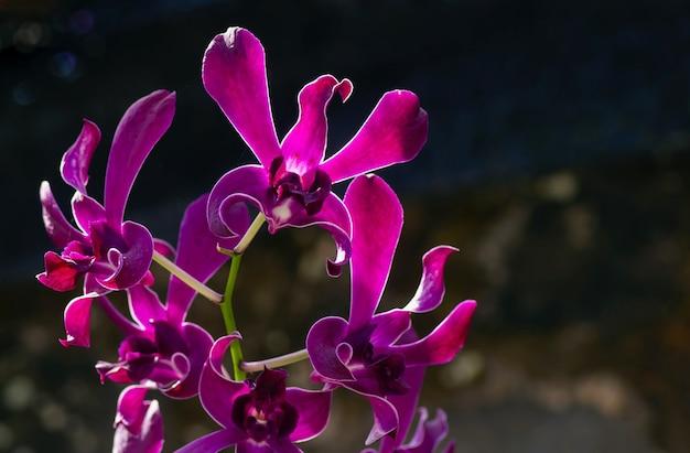 보라색 난초, 어두운 배경으로 촬영한 실루엣