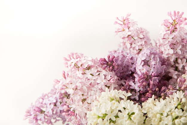Purple and pink lilac flowers on white