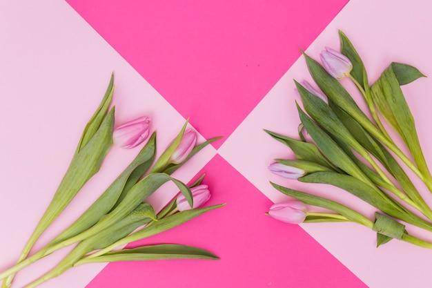 Mazzi di tulipani viola e rosa
