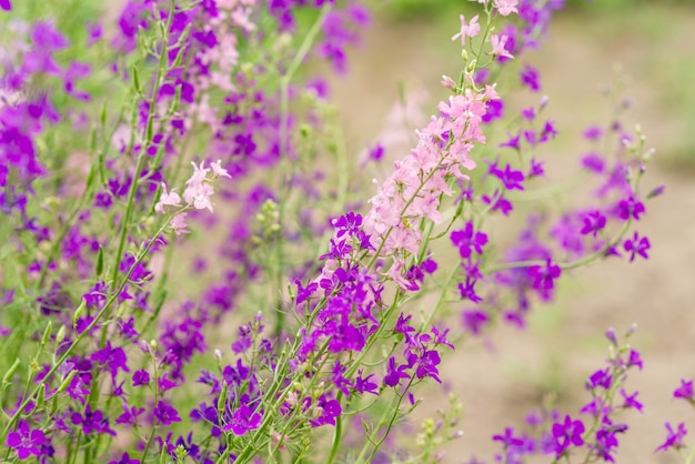Purple and pink wildflowers. summer photo