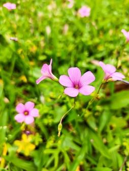 보라색 식물 정원 선택적 초점