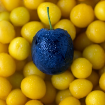 Purple plum on a background of yellow plum