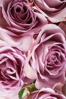 紫のバラの花の背景テクスチャ