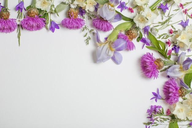 Фиолетовые летние цветы на белом фоне