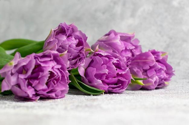 Purple tulips on gray textured background