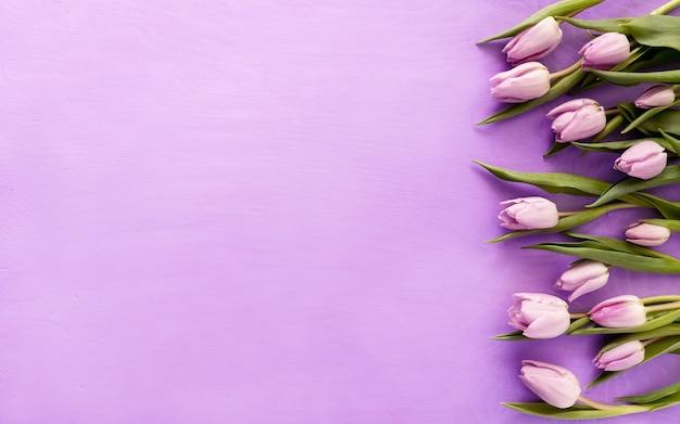 Фиолетовые тюльпаны на фиолетовом