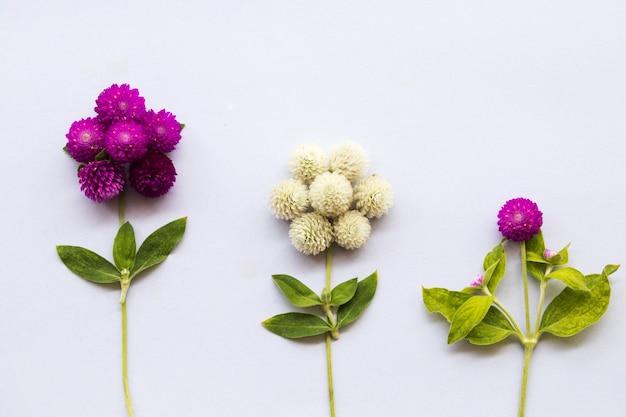 Purple and white flower globe amaranth arrangement postcard style