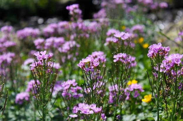 ジョージア州では、紫色の野花がマクロとクローズアップの頭をしています。自然とぼやけた表面。ボケ。