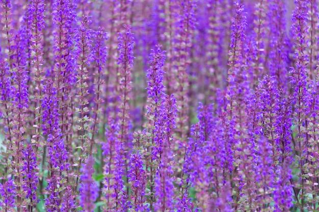 紫の野の花の背景。フィールド上の夏の草原の野生の花