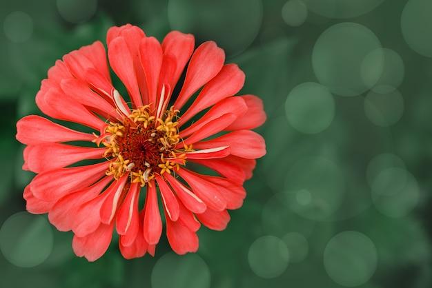 녹색 bokeh 여름 배경에 보라색 초속 꽃, 여름 꽃 추상적 인 배경