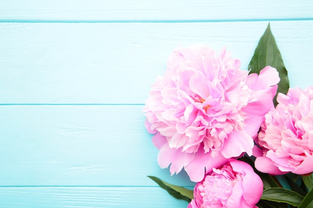Purpure peony flowers on blue wooden background.