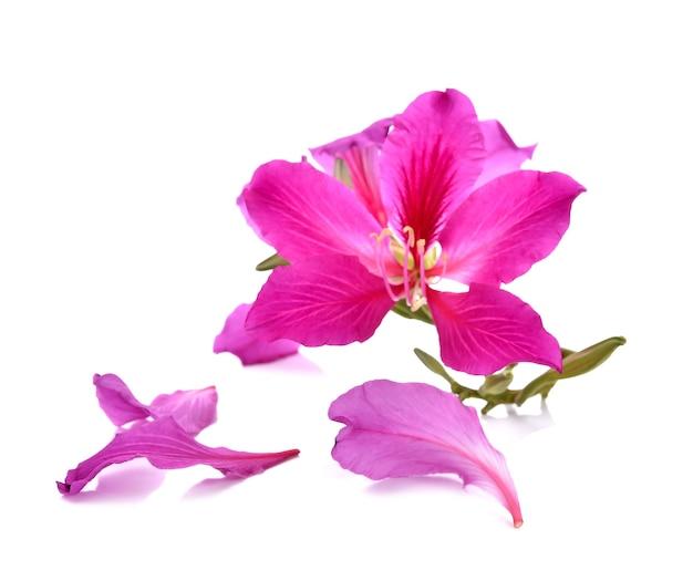 흰색에 purpurea 보라색 꽃