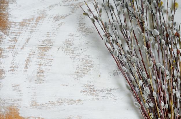 Веточки вербы на белом фоне