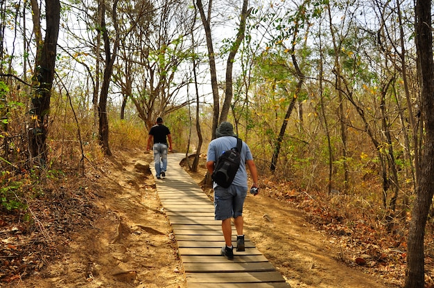 Puyango окаменевший лес