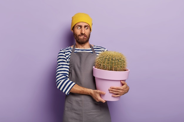Puzzled man holds pot of big cactus with sharp thorns, wears hat and apron, being plant lover