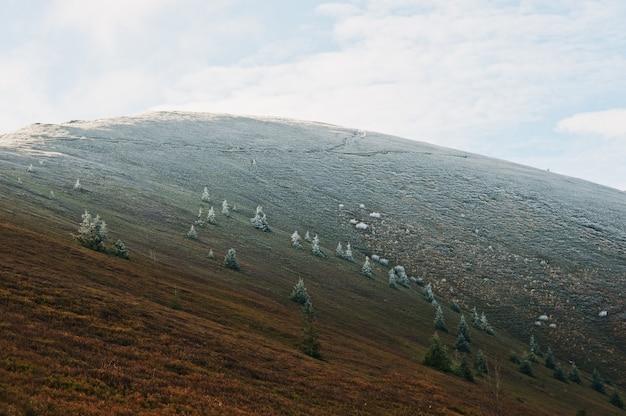 多くの霜新年の木と日光、カルパティア、pylypetsウクライナの丘。