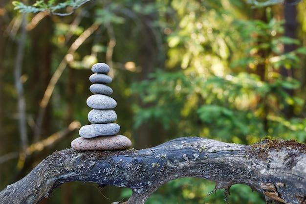 숲에서 나무 줄기에 피라미드 돌 균형. 초점 피라미드, 숲 배경이 흐려집니다.