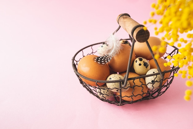 Quail and chicken eggs in metal basket with feather on pastel pink background