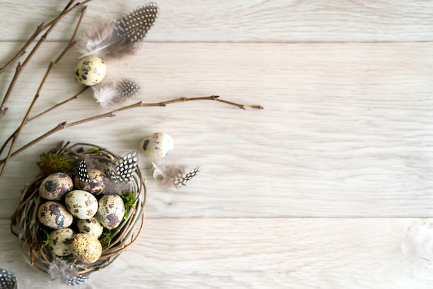 Quail easter eggs and feather in bird nest on rustic wooden background