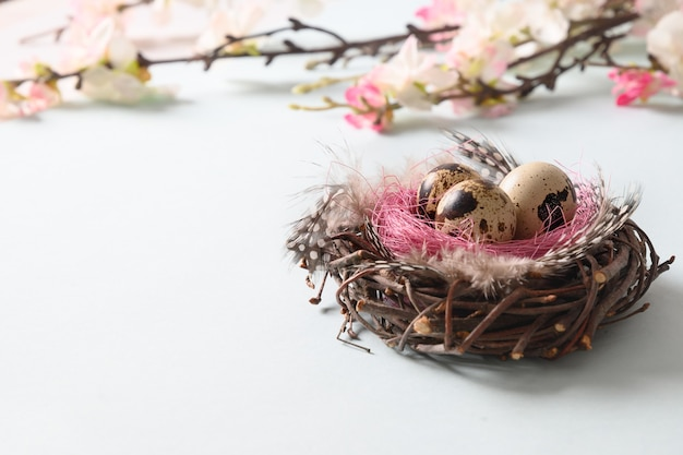 Quail easter eggs in nest and spring blomming flowers on blue.