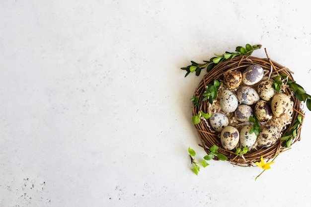 Quail easter eggs with spring green leaves in nest.