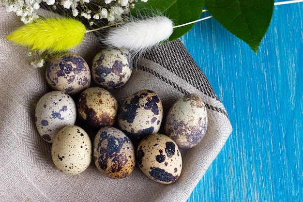 Quail eco eggs with flowers and linen napkin on the light-blue wooden