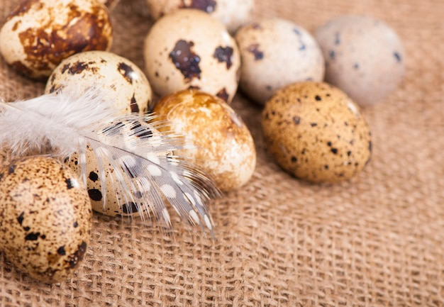 ウズラの卵と羽が布の上に横たわっています