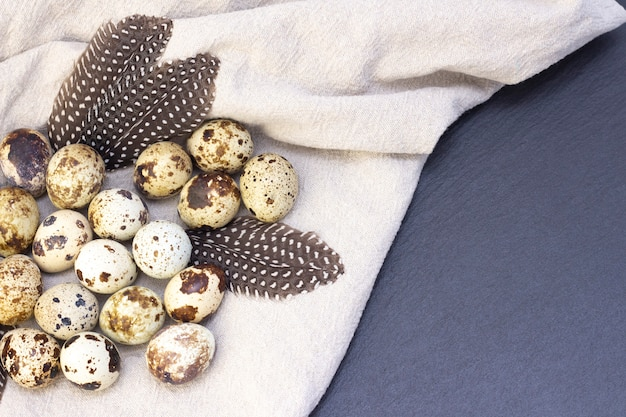 Quail eggs on burlap on a dark background. with quail feathers