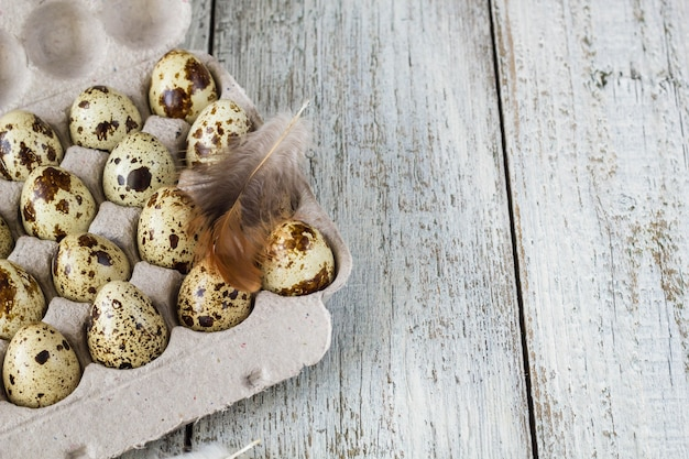 Quail eggs in a cardboard egg rack on white background with feather