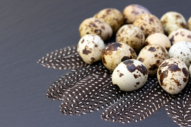Quail eggs on a dark background. with quail feathers