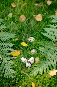 Quail eggs on grass in the garden