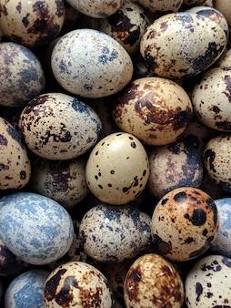 ウズラの卵イメージ