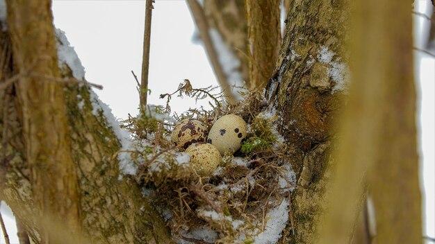 くぼみのウズラの卵